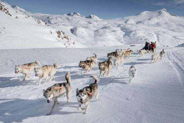 east greenland tasiilaq to sermilik huskies fanning out in front of sled vg mp