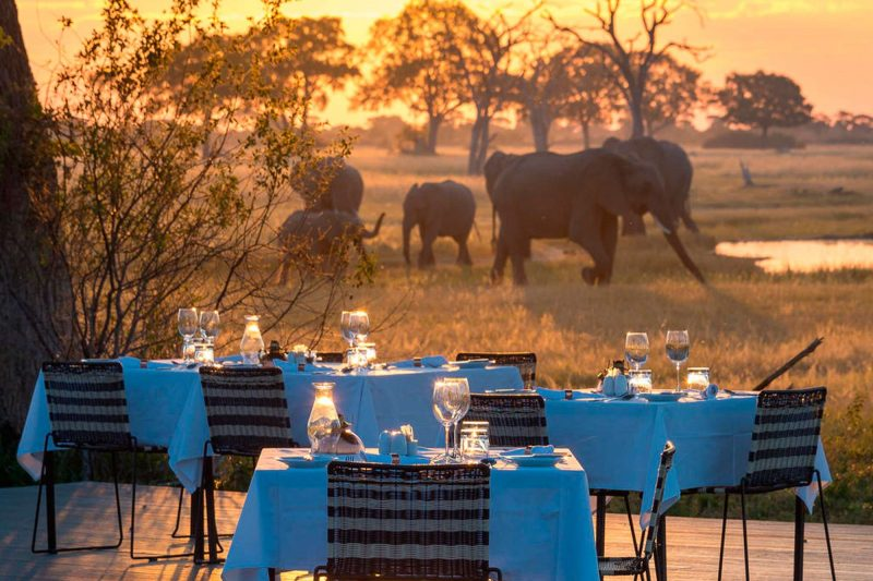 linkwasha hwange dining and elephants