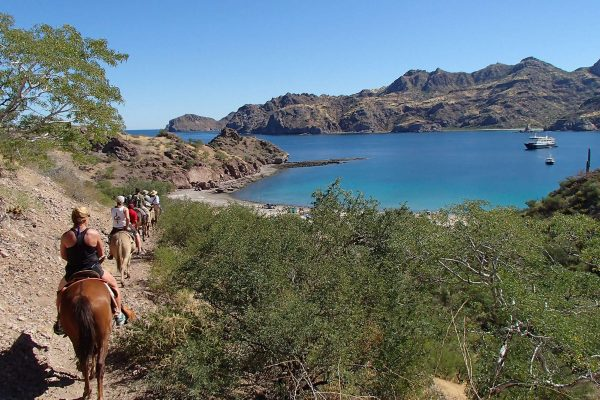 baja california mule ride into the arroyos uncr