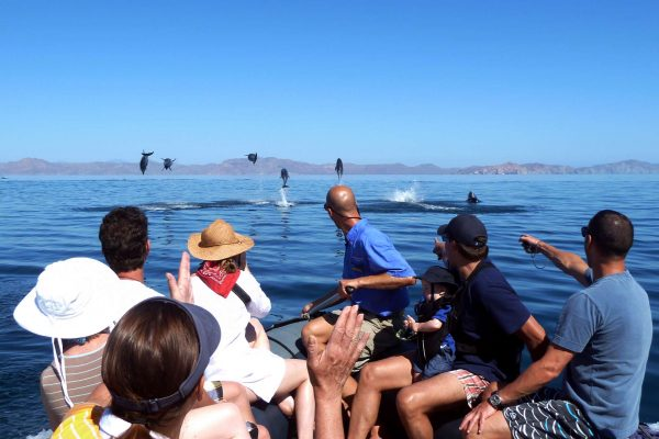baja california zodiac group with dolphins uncr