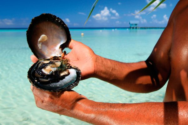 french polynesia displaying a cultured pearl tt