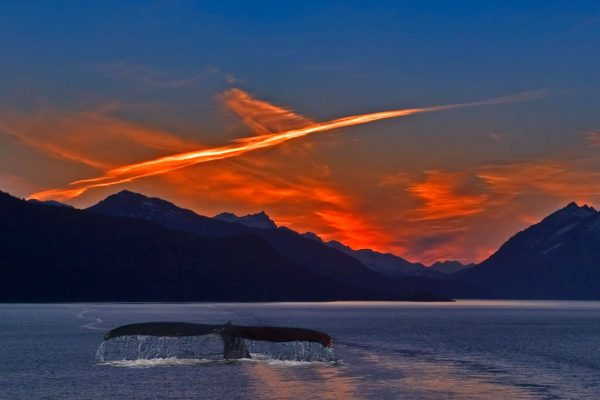 alaska coast sunset humpback whale tail istk