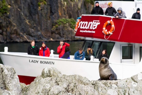 milford sound encounter nature cruise seal watching sthndisc