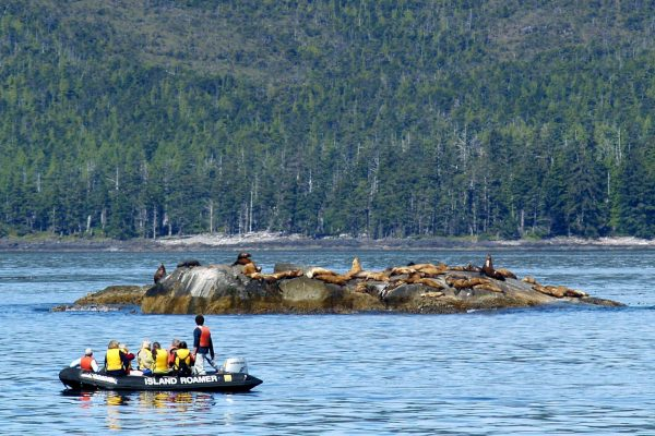 british columbia zodiac with sea lions haida gwaii bluewater adventures