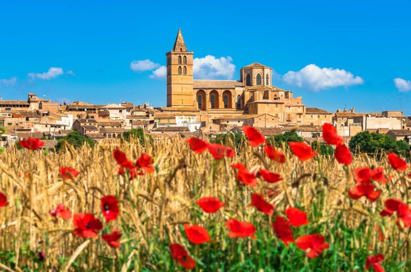 edu mallorca sineu village poppies