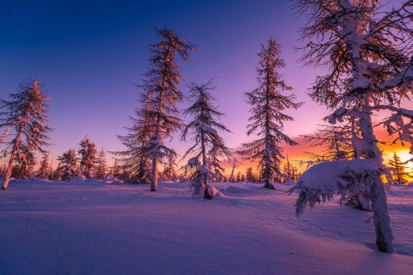 finland lapland purple sunset taiga forest istk