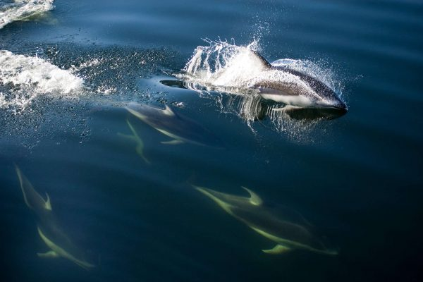 british columbia great bear rainforest dolphins crs