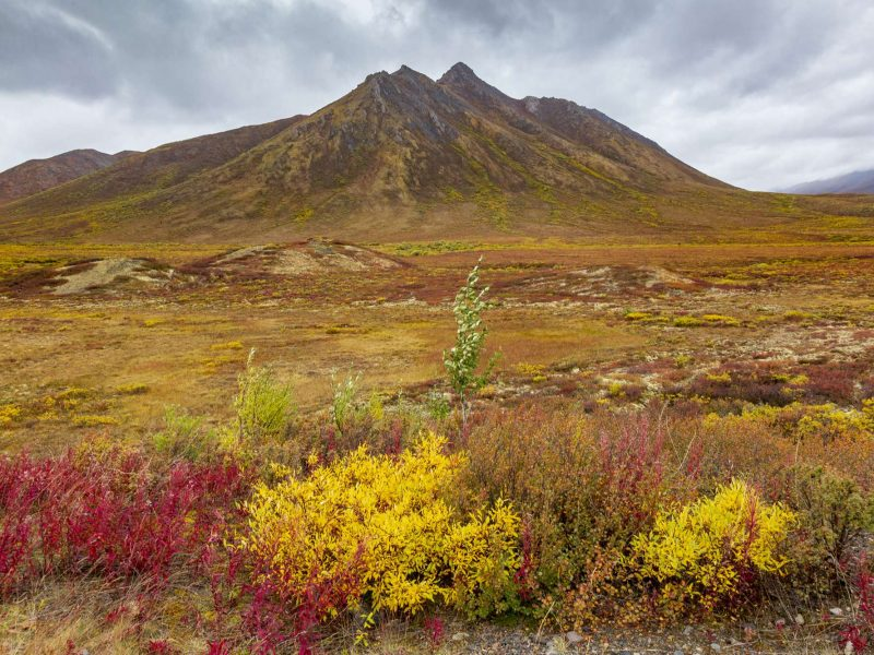 canada yukon autumn in territorial national park istk