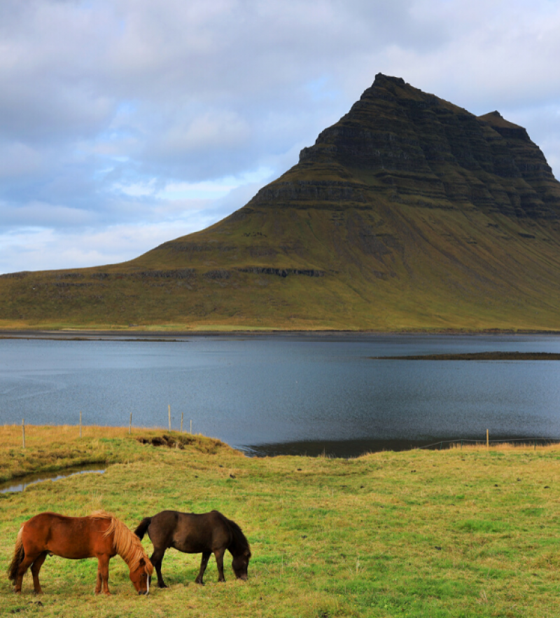 Volcano in Iceland with horses