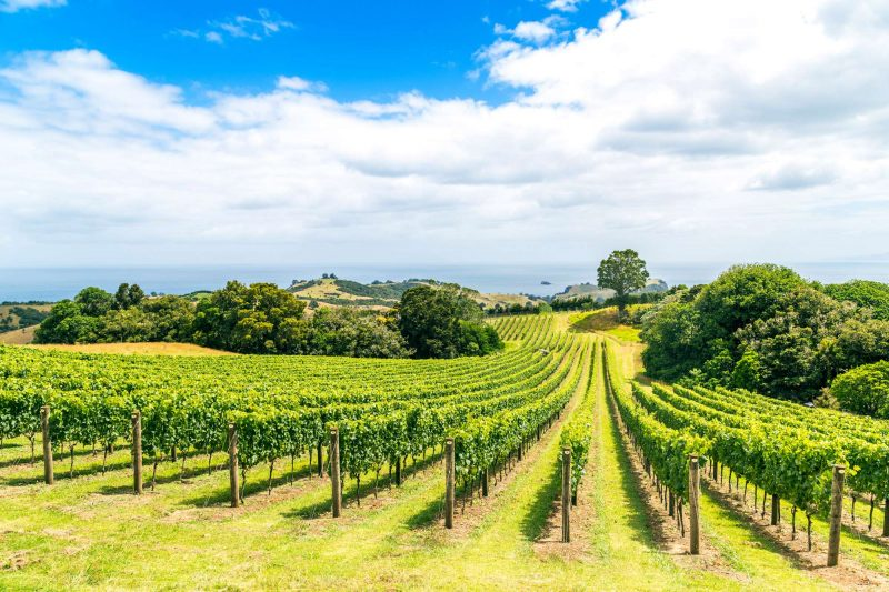 new zealand waiheke island vineyard istk