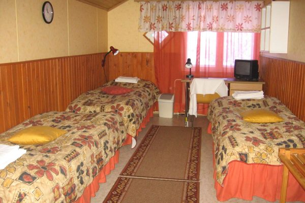 wild brown bear guesthouse room